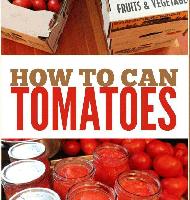 روش تهیه ساده رب گوجه فرنگی