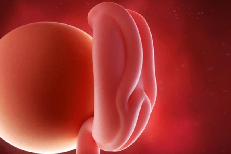 ماه اول بارداری